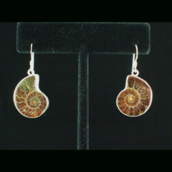 Ammonite Sterling Silver Dangle Earrings