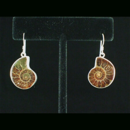 Ammonite Sterling Silver Dangle Earrings